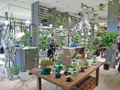 5階では観葉植物も販売