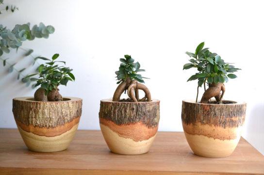 植栽のイメージ
