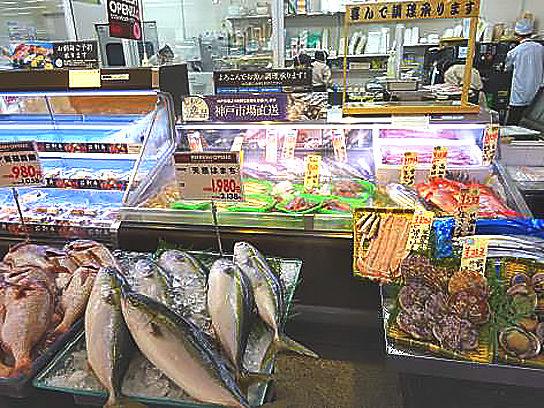 魚の対面コーナーのイメージ