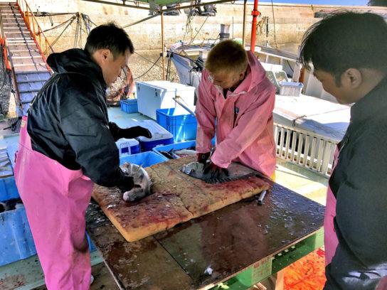 魚島での活締めの作業