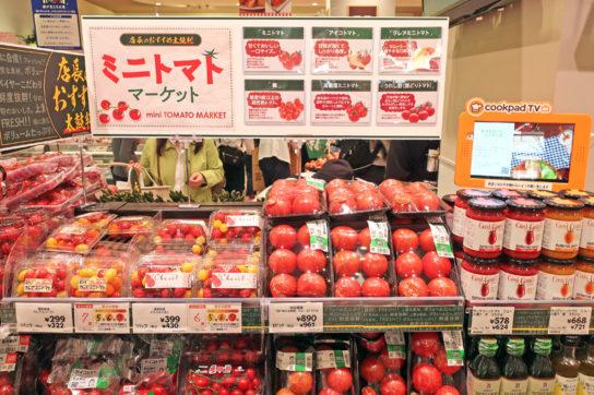 野菜に関する基礎知識を紹介