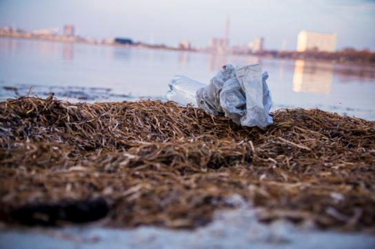 海洋ゴミの一例