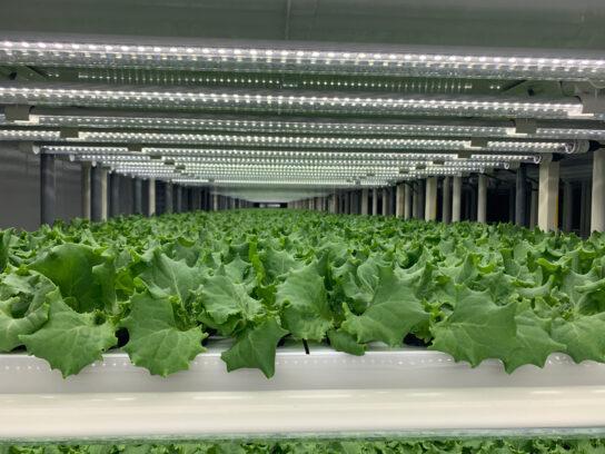 植物工場のイメージ