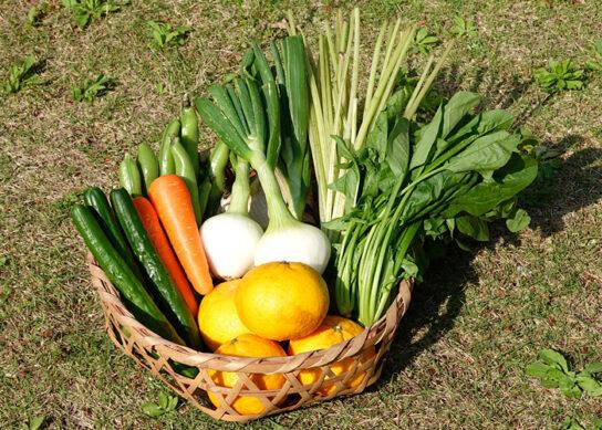 南房総の野菜セット