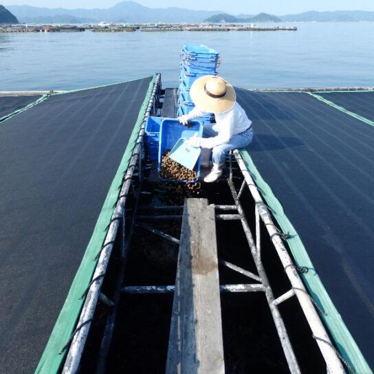 20200619kura 544x544 - くら寿司/「新型コロナ」で買い手減の愛媛県産養殖マダイ200トン購入