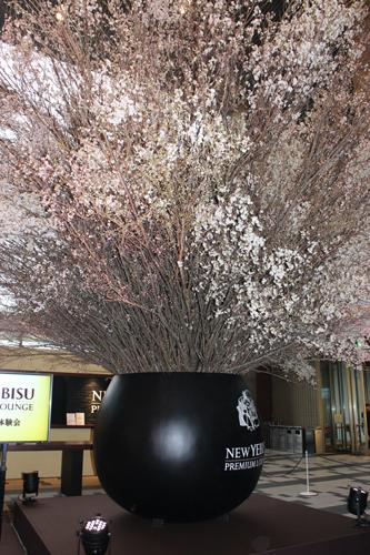 西畠清順氏が手がけた満開の桜
