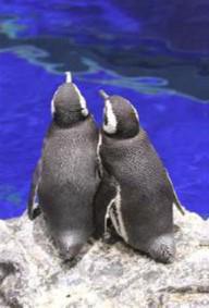 仲睦まじいペンギンのカップル